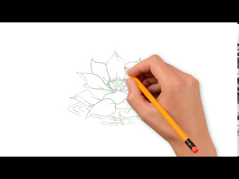 How To Draw A Lotus Flower Step By Step Easy How To Draw A Lotus