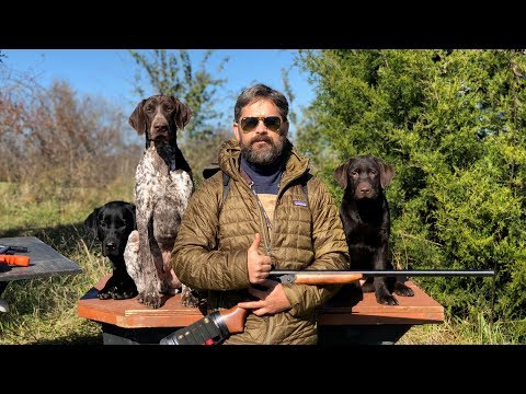 Labrador Retriever Training - Raising an Awesome Family Dog That Goes Hunting Sometimes
