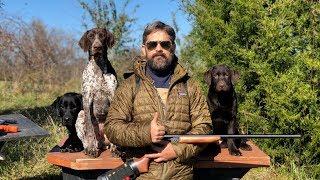 Labrador Retriever Training  Raising an Awesome Family Dog That Goes Hunting Sometimes
