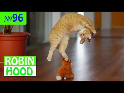 ПРИКОЛЫ 2017 с животными. Смешные Коты, Собаки, Попугаи // Funny Dogs Cats Compilation. Май №96