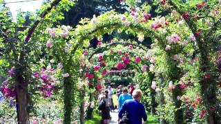 Walking under Flowered Trellis Arches