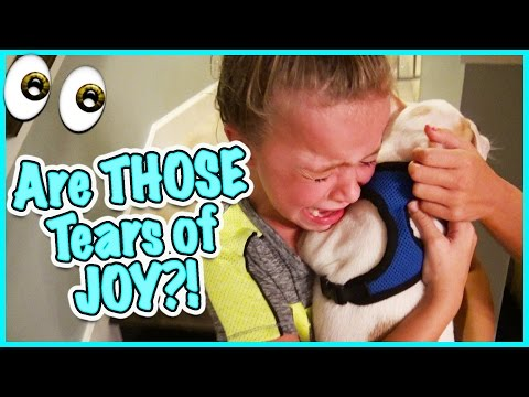 Thumbnail: 🙃 DO WE GET A FRENCHIE? NO CRYING ALLOWED! 🙃SMELLYBELLY TV VLOGS