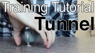 Tunnel | Training Tutorial