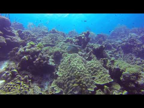 Bonaire Diving