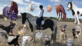 Meet All Of My Pets & Horses | Updated