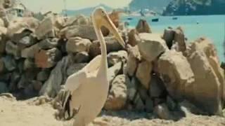 Пеликан - Русский трейлер