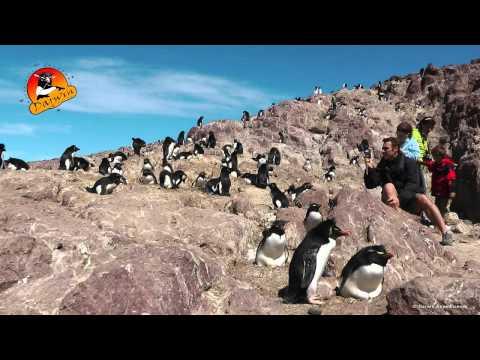 Isla Pingüino - Puerto Deseado - Patagonia by  Darwin Expeditions