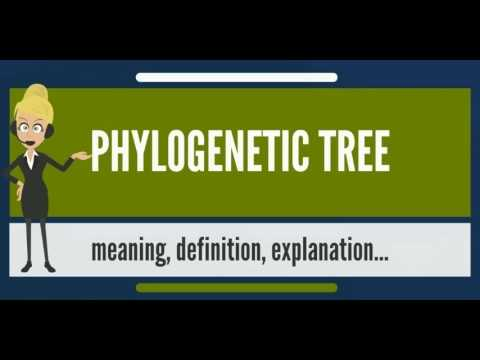What is PHYLOGENETIC TREE? What does PHYLOGENETIC TREE mean? PHYLOGENETIC TREE meaning