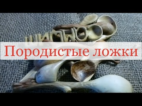 Карагана - zhenskoe-