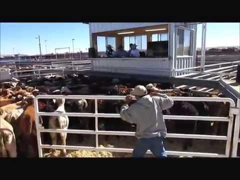 Columbus Livestock Auction Pt 2 Columbus N.M.