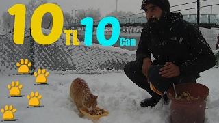 10 lira ile 10 Sokak Hayvanı Beslemek Kolay Gelsin