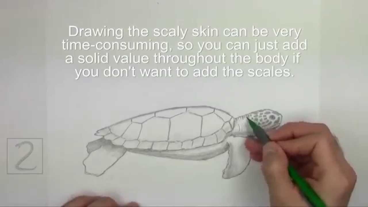 Karakalem Yeşil Deniz Kaplumbağası çizimi Youtube