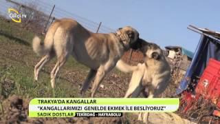 SADIK DOSTLAR/TEKİRDAĞ-HAYRABOLU-TRAKYA DA KANGALLAR