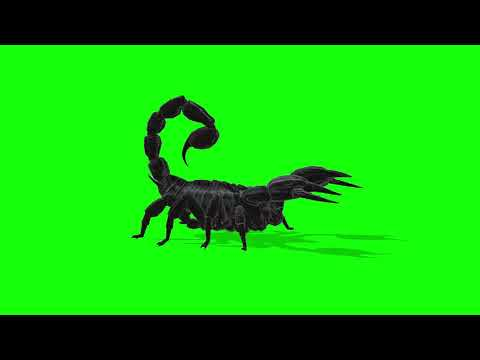 free green screen video, visual effects, animal, scorpion