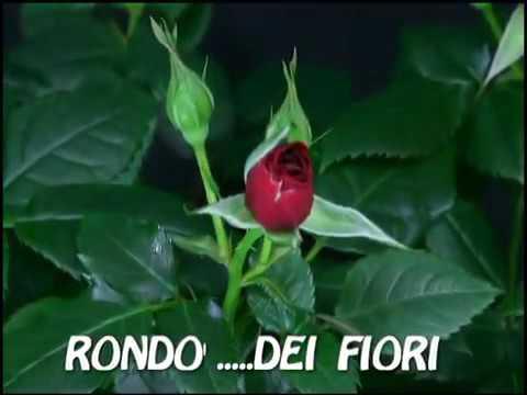 Immagini di buongiorno youtube - Immagini di giardini di villette ...