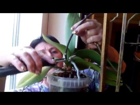 Смешное видео для детей - маленький ёжик кушает биточек