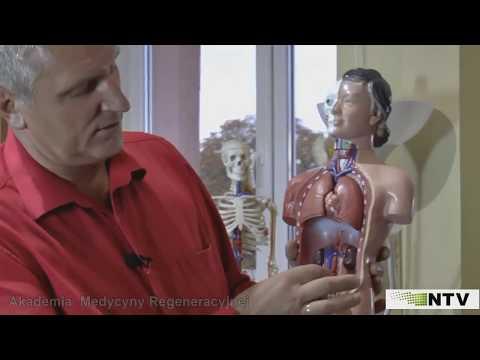 Presentation Of Manual Diagnosis. Aliaksandr Haretski. The Academy of Regenerative Medicine.