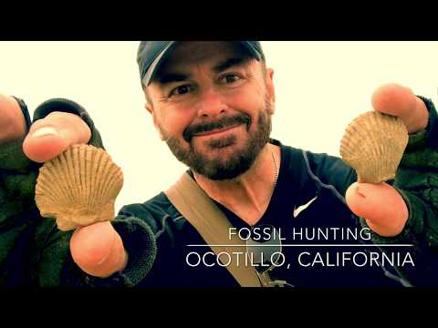 Fossil Backpacking Trip, Ocotillo, California