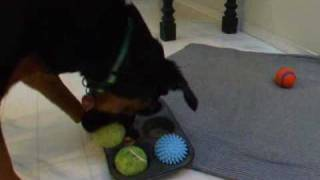Mind & Scent Game For Dogs: Muffin Tin