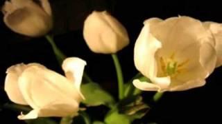 Saage Jeevana gaanam, anuvanuvuna ruturagam ... [High Quality] Telugu Melodious Song