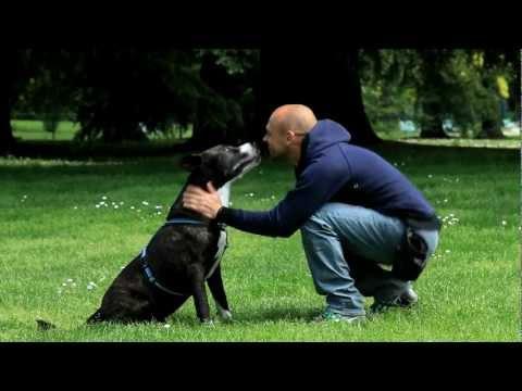 Simone Dalla Valle, Un cane per amico: booktrailer