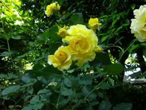 As minhas flores.de Agadão