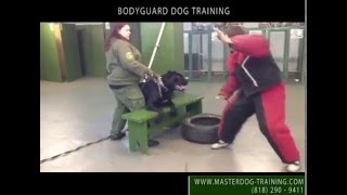 Master Dog Training