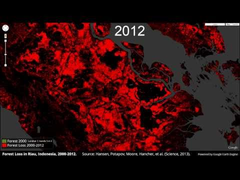 Forest Loss in Riau, Indonesia, 2000-2012