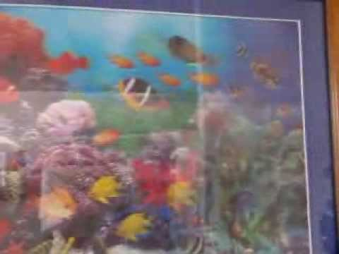 video clip - coral reef fishes in a picture - appear and disappear as you move - sidneysealine