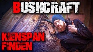 Kienspan suchen finden erkennen sammeln ernten Feuer Zunder (german/deutsch) Bushcraft Survival
