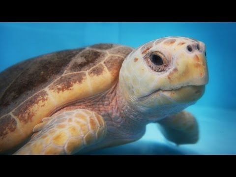 Florida Travel: A Glimpse of the Wild at Gumbo Limbo Nature Center