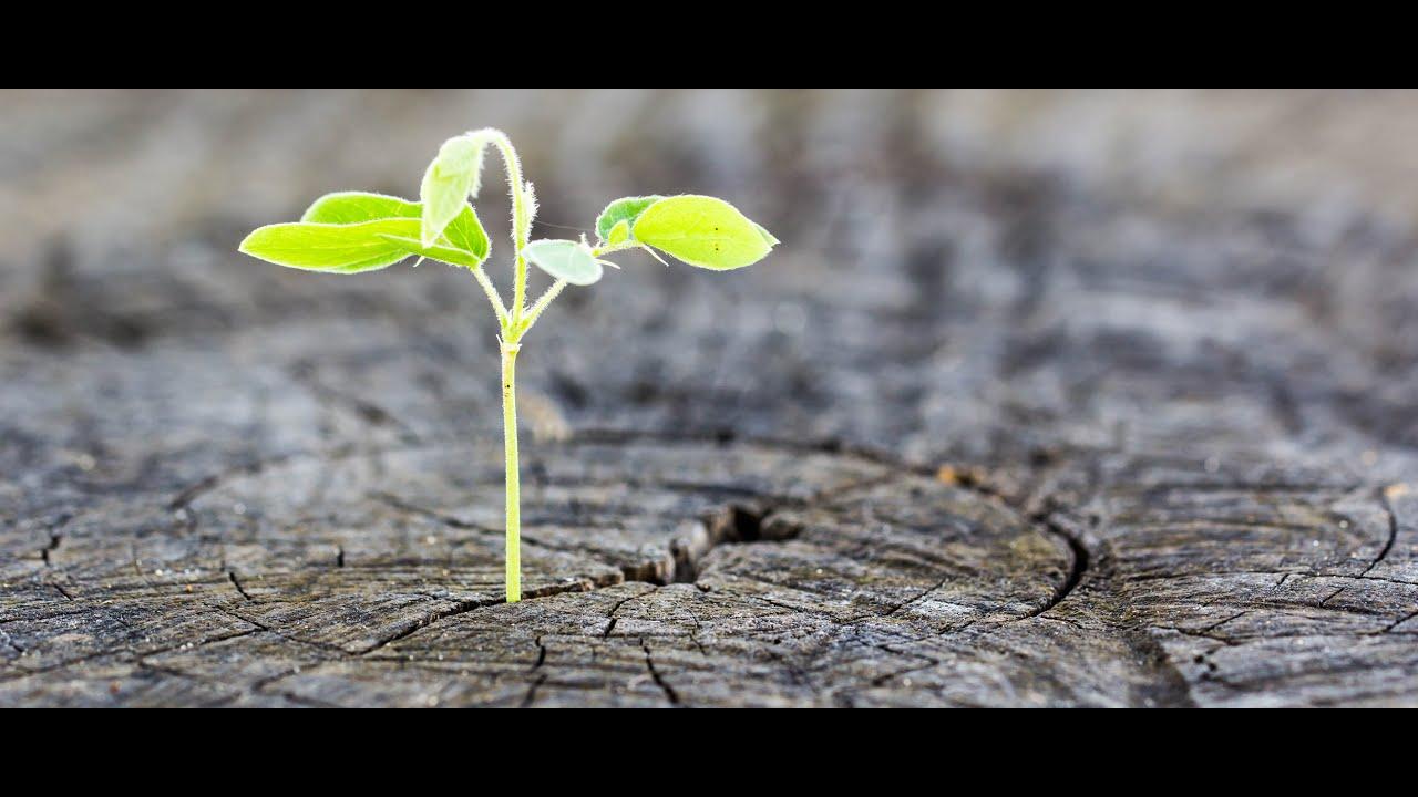 Nurturing Hope 2021