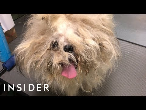 Groomer Gives Shelter Dogs Life-Saving Makeovers