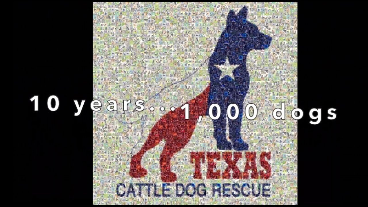 About | Texas Cattle Dog Rescue