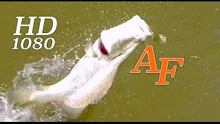 Plan On Jacks And Get Barra Melbourne Fishos Andysfishing Fishing Video Big Fish Ep.187