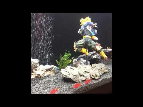 Starfire Red GloFish Tigerbarbs
