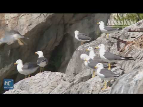 Welcome to Eden of bird! Rarely seen birds found on China's conservation island