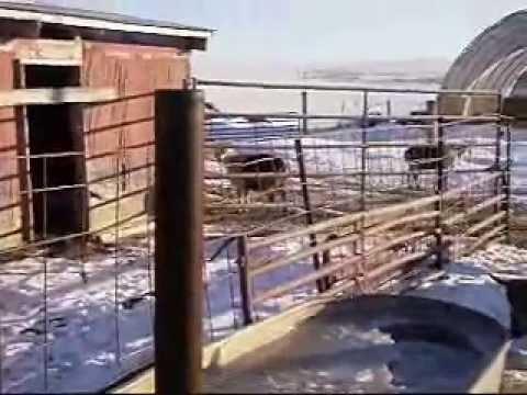 Wood Fired Water Heater Wmv Youtube