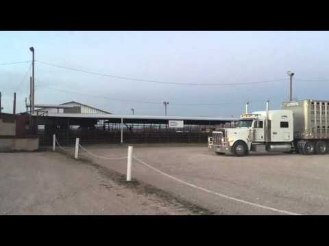 At Livestock Auction Abilene, Texas