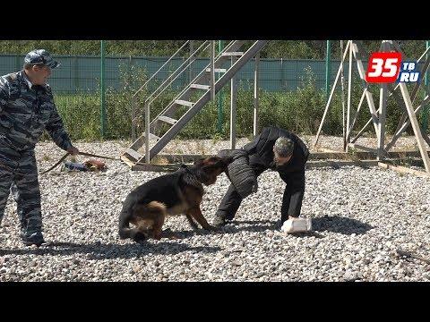 Кинологи рассказывают, как защититься от нападения собаки