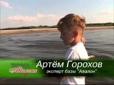 Волжский судак - Семейная рыбалка в Астраханской области