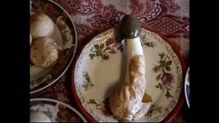 Грибы Веселки  Как приготовить лекарство. Лечение грибом Веселка.