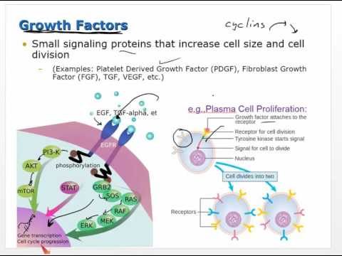 Pathophysiology -  Cell Proliferation and Tissue Generation and Repair - Ch4