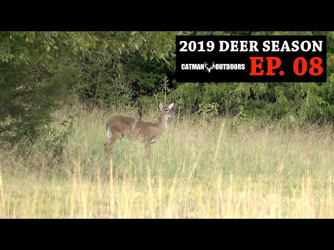 Finally a Cold Front! Bowhunting from the Ground - 2019 Deer Season, Ep. 08