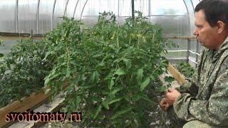 Формирование и уход за томатами в теплицах(, 2016-06-08T14:13:25.000Z)