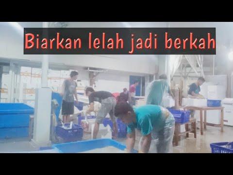 INILAH PROSES PACKING IKAN LAYUR - YouTube