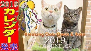 【猫のカレンダー2019】ついにアメキャッツカレンダーが発売開始!子猫から現在までの厳選素材を使って制作しました!