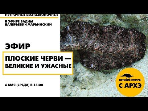 Детский эфир «Плоские черви — великие и ужасные»| «Неурочные беспозвоночные» с Вадимом Марьинским