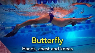 Swimming Butterfly technique. Hands, chest and knees