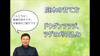 神奈川県相模原市の植木屋・庭誠です。 植木の剪定・伐採・消毒・抜根・...
